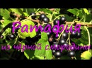 Ратафия из черной смородины