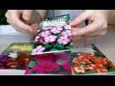 Бальзамин 🌹 Выращивание из семян в домашних условиях 🌹