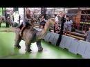 Планета динозавров Анечка катается на динозаврике Dinosaur_Planet. Anya rides a dinosaur