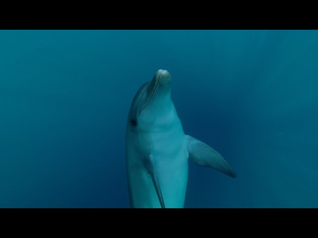 SARDEGNA - Nuotando con i Delfini a Golfo Aranci🐬