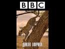 BBC Дикая Африка Серия 1