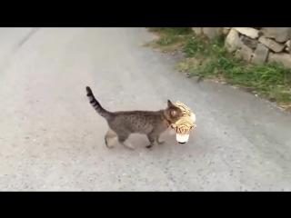 Шокирующие видео! Кот утащил ТИГРА и попытался съесть в кустах