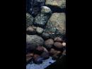 Голубые рыбки