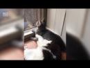 Порой котам вообще на все насрать