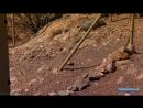 В мире дикой природы Долина смерти Документальный путешествие 2009