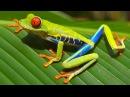 Коста Рика Восхитительная флора и фауна качество 4К
