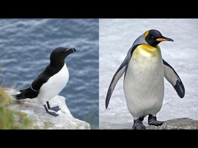PINGOUIN OU MANCHOT QUELLE EST LA DIFFÉRENCE
