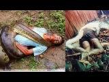 Biggest Python Snake Attacks Human | Giant Anaconda | Most amazing wild animal attacks #1