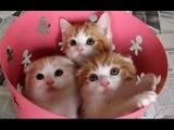 Funny cats in 2017 a new part 2  Smesne macke 2017 novo 2 deo  Забавные кошки в 2017 году  часть 2