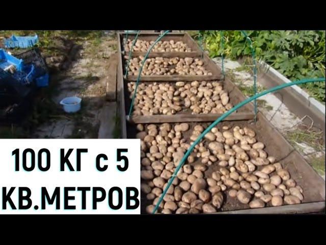 Выращивание картофеля на малой площади.