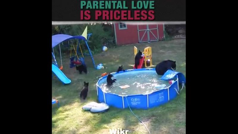 Родительская любовь бесценна