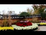 Южная Корея. Инчхон. Традиционный парк Вольми. Цветы. (384)