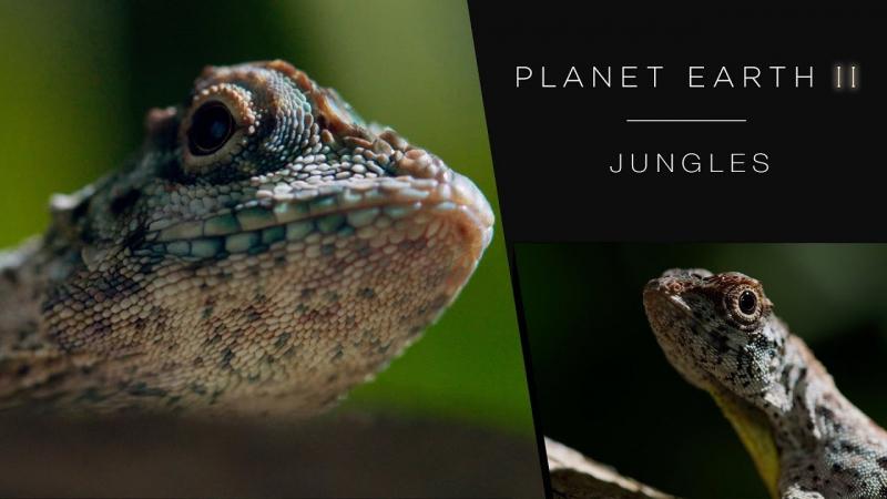 Планета Земля 2, Эпизод 3: Джунгли/ Planet Earth II, Episode 3: Jungles