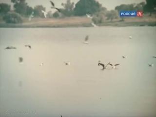 250a.Приключения Тома Сойера и Гекльберри Финна (1981) Rusko (No kids porn!)