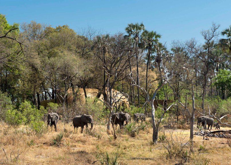 Sandibe Okavango Safari Lodge provides luxury getaway