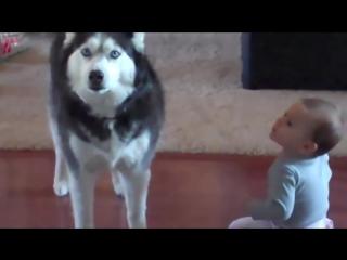 Хаски говорит с ребенком.