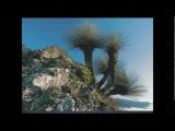 James Asher + Madeleine Doherty - Magenta