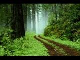 James Asher - Green Meditation music