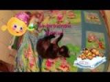 Дети и кошки. Василиса и Девон-Рекс  Funny Videos Cats and Kids!