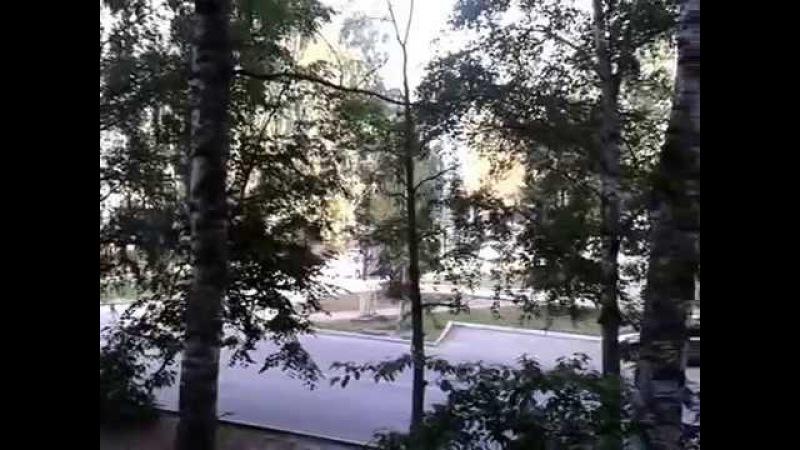 с добрым утром -вид с балкона -русские берёзы- я в гостях у подписчиков
