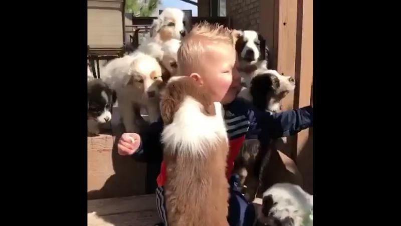 Fun with pups