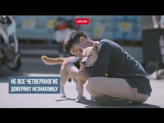 Парень обнимающий собак