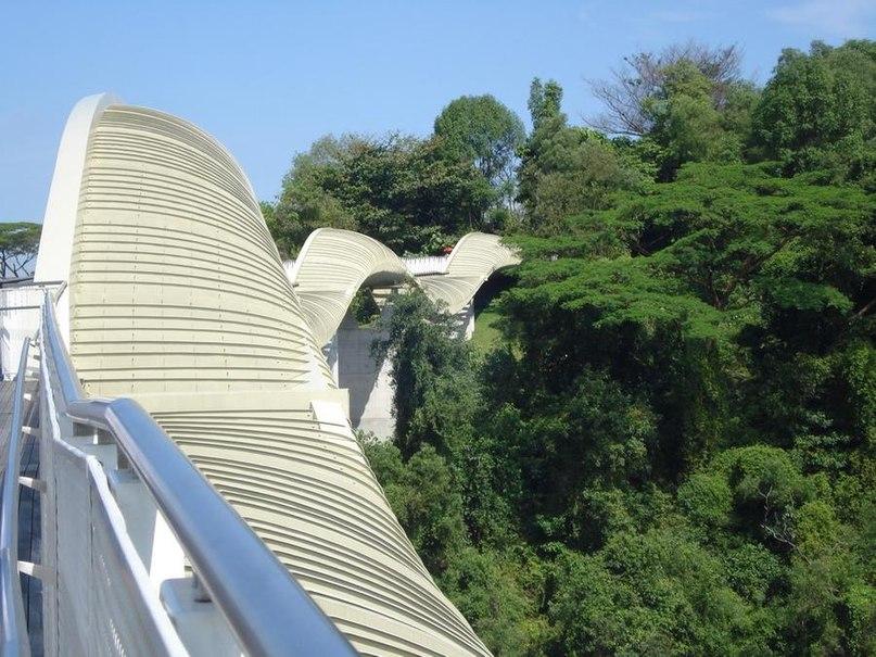 В 2008 году в Сингапуре появилось удивительное
