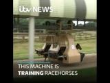 Тренинг скаковых лошадей