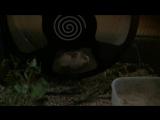 Хомяк роборовского в пластиковом колесе Трикси 28см.
