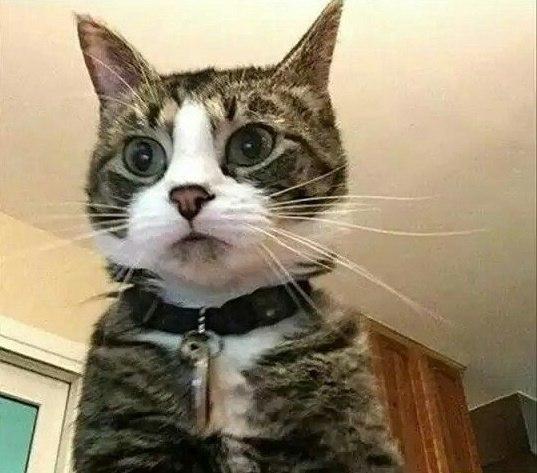 """""""Мой ноутбук делает снимок, если кто-то трижды вводит неверный пароль..."""""""