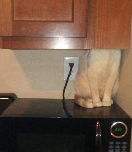 Поиграть с котом в прятки было так себе идеей...