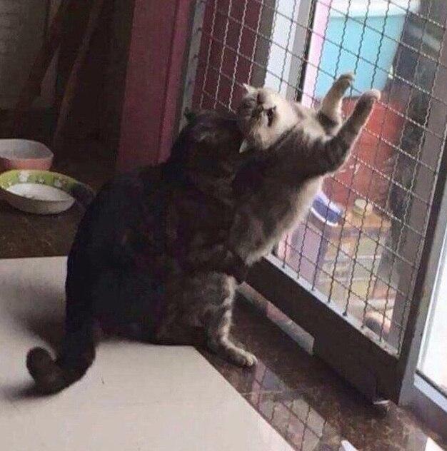 50 оттенков кота Бориса
