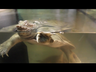 ТК Терра 5-й Заречный 11 К    Выставка-зоопарк   27.02.2017