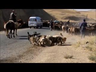Липецк видео ответ 2 защитникам бездомным собакам Репост поста если за отстре...
