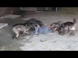 Липецк видео ответ 7 защитникам бездомным собакам Репост поста если за отстре...