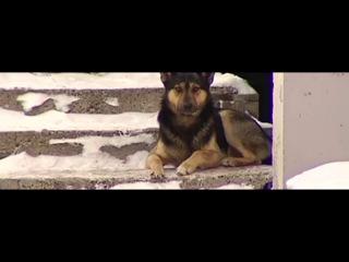 Липецк видео ответ 5 защитникам бездомным собакам