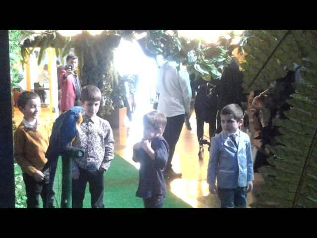 8(916)702-11-08 Попугай КиноЗоопарк