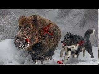 Охота от Первого Лица! Зимняя охота на дикого кабана!