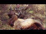 Охота на изюбря восточноазиатский олень