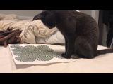 Кота вывела из себя оптическая иллюзия