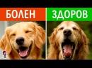 12 СКРЫТЫХ СОБАЧЬИХ ЗНАКОВ. Как понять язык собак