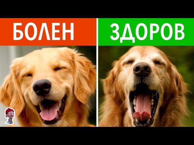 12 СКРЫТЫХ СОБАЧЬИХ ЗНАКОВ. Как понять язык собак?