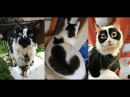 КОШКИ С НЕОБЫЧНЫМ ОКРАСОМ! cats with unusual coloring