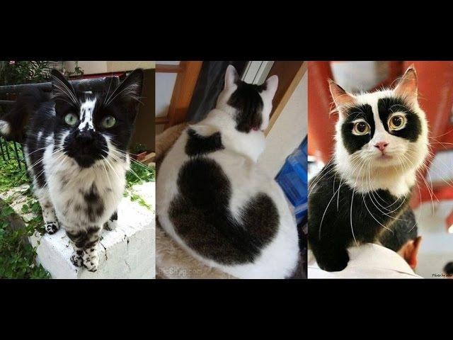 КОШКИ С НЕОБЫЧНЫМ ОКРАСОМ cats with unusual coloring