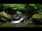 Relaxing Nature Sounds for Meditation Relaxation-W/O Birdsong-Study Sleep-Johnnie Lawson