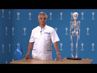 Боль в спине: нарушения осанки, травмы. Советы родителям - Союз педиатров России
