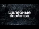 О ЖЕМЧУГЕ. Светлана Гураль в рамках проекта