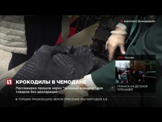 В аэропорту Домодедово таможня задержала пассажирку, перевозившую шкуры рептилий