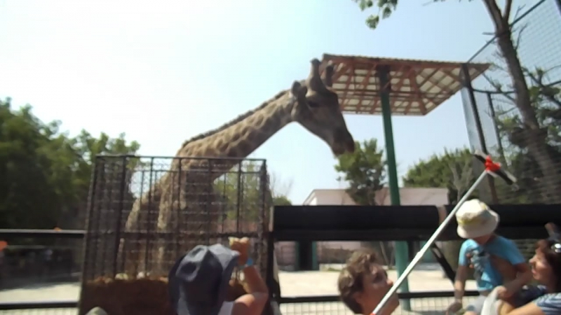 Парк Тайган.Жираф съел мой банан!