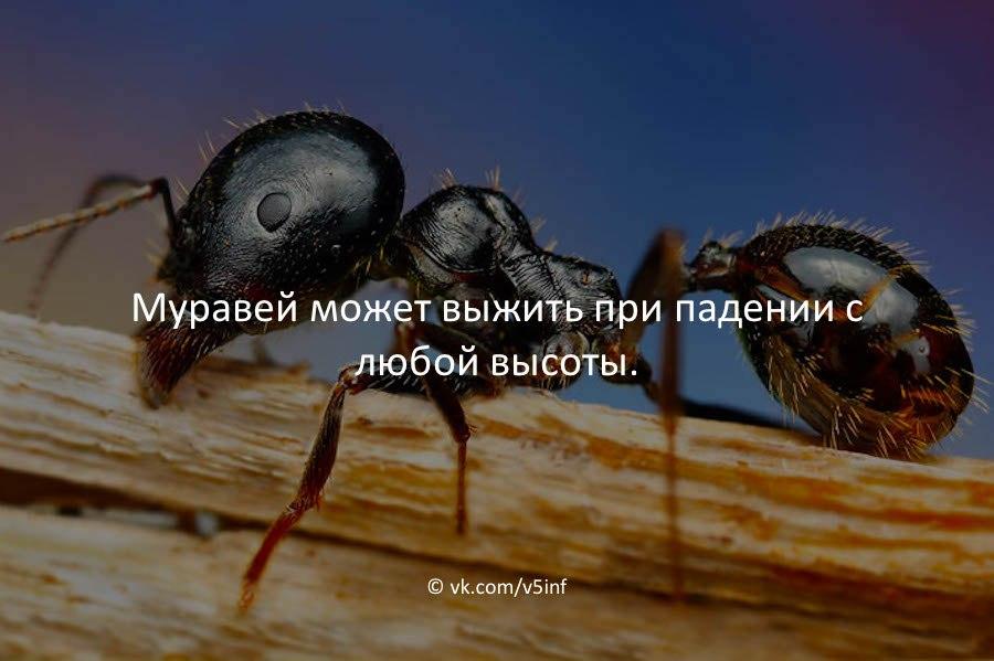 https://cs541603.vk.me/c836729/v836729585/2a6e7/YKrbKuHz3P8.jpg
